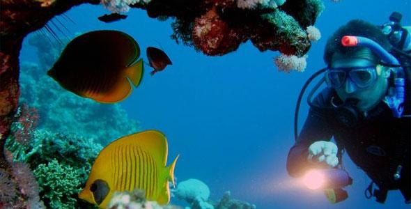 adopting-fish-from-the-ocean