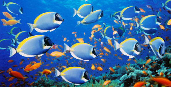 Fish and Pressure – Fish Breeds – Information and pictures ...