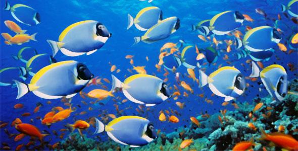 fish-and-pressure