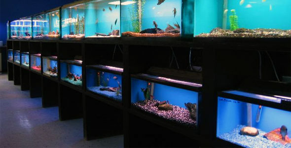 Picking a quality fish store fish breeds information for Tropical fish shop